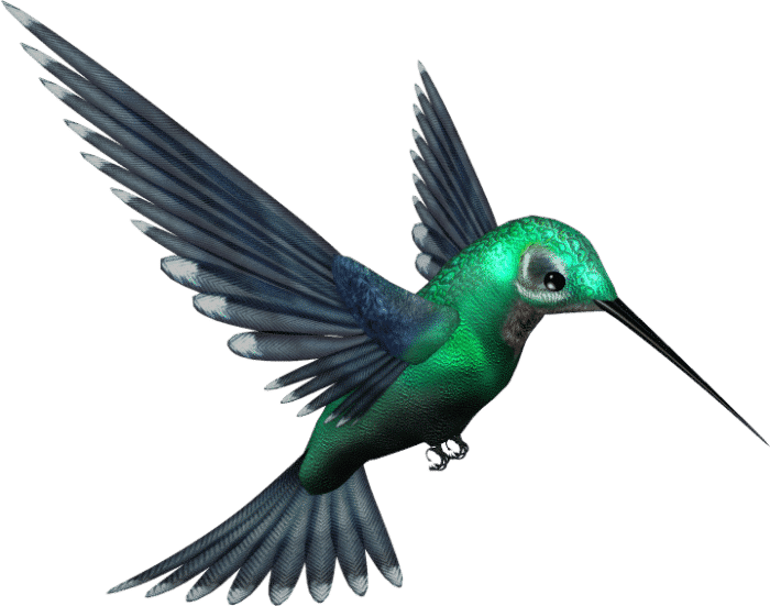 Hummingbird Changed SEO in September 2013 1